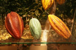 3-cacao-varieties