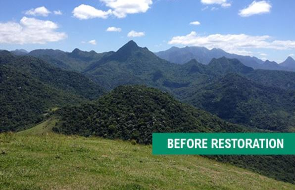 Brazil Panama And Costa Rica Breath New Life Into Their Degraded