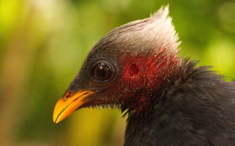 Micronesian project to restore their endangered